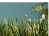 Birds of Feather - Photo from Raffaello Galiotto web site