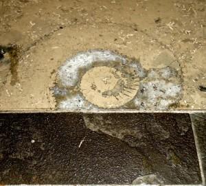 Ammonite in Seattle